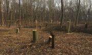 Бракониери отсякоха 180 дървета край Сандански