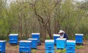 70% от пчелите в Тервелско са унищожени