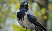 Хищни птици атакуват софиянци