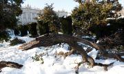 Мадрид ще отсече 80 000 дървета