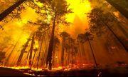 Пожарът край гръцкия град Патра продължава да бушува