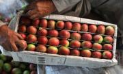 Великобритания търси повече сезонни работници