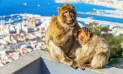 Над 20 маймуни избягаха от зоопарк