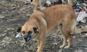 Бездомни кучета нахапаха 8-годишно дете в Трън