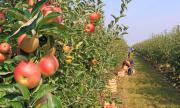 Италия узаконява временно престоя на работници