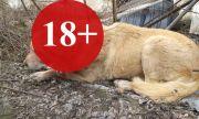 Опитаха да скалпират куче в Бургас