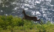 Оттеглят промените в Закона за лова и опазване на дивеча