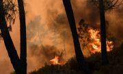 Пожар край турски курорт е взел най-малко една жертва