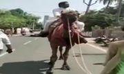 Политик яхна камила. Бензинът е скъп