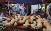 Една вековна китайска традиция: ястия от кучета, котки, прилепи и мечки