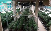 Разбиха модерна лаборатория за марихуана за 500 бона в Ловешко