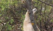Обесиха родило наскоро куче на дърво в Червен бряг