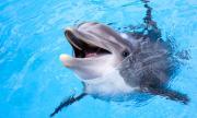 Делфини роботи може да заменят истинските в аквапаркове (СНИМКИ)