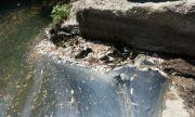 Рибата в Янтра не била умряла след химическо отравяне