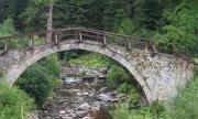 23 случая на щети от мечки за месец из селата в Родопите