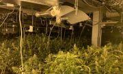 Разкриха високотехнологична лаборатория за марихуана в Русенско