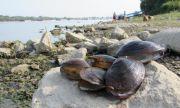 Поморие се вдигна срещу мидена ферма - блокирала риболова