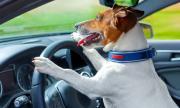 Съдят пияница, учил кучето си да кара със 160 км/ч