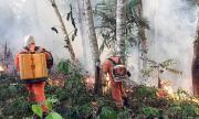 Повече горски пожари в амазонската джунгла в Бразилия през юли