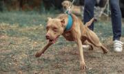 Куче обезобрази младеж в монтанско село