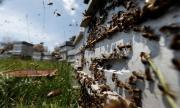 Слаба реколта на мед