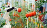 Роботи сменят сезонните работници във Великобритания