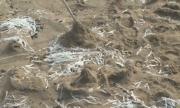 Бели лентички изхвърля морето по плажовете на Черноморието