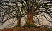 Дърветата страдат от шума, дори след като е спрял