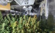 Къща с оранжерия за марихуана изгоря в София, задържаха собственика