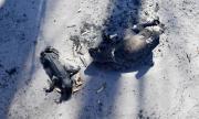 800 милиона животни са загинали в Австралия
