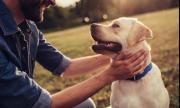 Кучета ще откриват пациенти, заразени с коронавирус