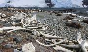 Откриха 11-метров скелет на плаж в Шотландия (СНИМКИ)