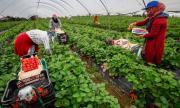 Румънски сезонни работници пристигат на Острова