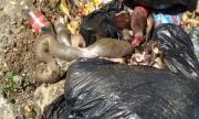Трупове на заклани животни, мръсотия и неописуема смрад тровят жителите на Пловдив