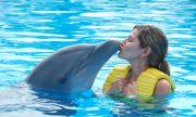 Приличаме си с делфините още повече, отколкото се смяташе