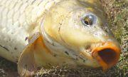 Ексцентрична рибарка уловила 72-килограмов великан