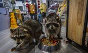 Китай затвори пазарите за диви животни. Но опасността си остава