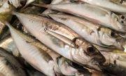 Нелегален риболов: как Китай бракониерства в чужди води