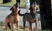 Прокуратурата разпореди проверка на бездомните кучета в София