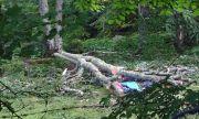 Жена загина, затисната от дърво в Разградско
