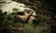 Откриха труп на мъж край автогарата на Бенковски