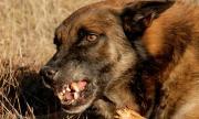 Агресивни кучета нахапаха мъж, в болница е
