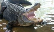 Мъж бръкна в устата на крокодил, за да спаси кучето си (ВИДЕО)