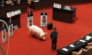 Юмруци и свински черва в тайванския парламент