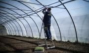 ЕК призова страните-членки да отворят границите си за сезонните земеделски работници