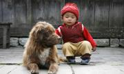 Северна Корея: Кучетата са храна, а не буржоазни домашни любимци