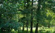 Над 1 100 собственици на гори искат да ги продадат на държавата