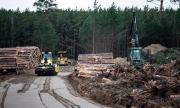 Tesla може да продължи да сече гори в Германия