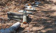 Беззаконие: системен бракониер опря мачете в гърлото на горски стражар