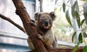 Паника: Десетки австралийски видове изчезват завинаги
